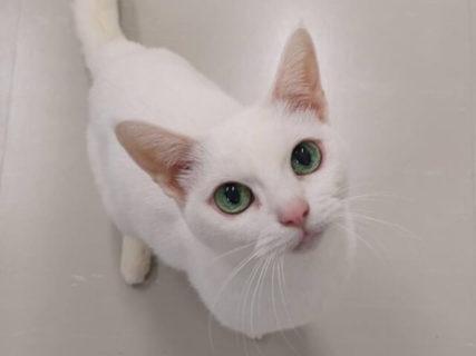 人間の年齢で100歳に相当する美魔女猫の「あなご」が逝去、18日までお別れの場を提供中