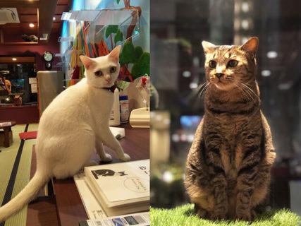 宮古島からやってくる子猫と出会いのチャンス!銭湯風の猫カフェ「ねこ浴場」で譲渡会が開催