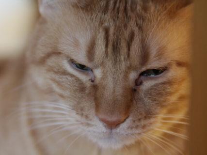 老猫のケアから看取りまでを獣医師がじっくり講義「猫様のためのシニアゼミ」8月31日に開催