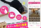 尿量計測など6機能を追加!スマート猫トイレ「toletta(トレッタ)」がバージョン2に進化