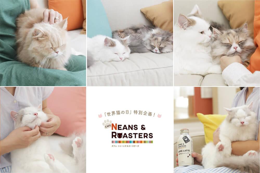 UCCが公開した「猫を癒す8通りの方法を紹介する動画」のイメージ