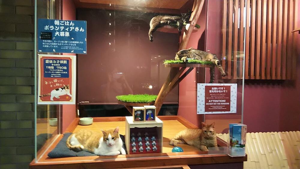「ねこ浴場」の外観、ガラス張りの中でくつろぐ猫スタッフたち