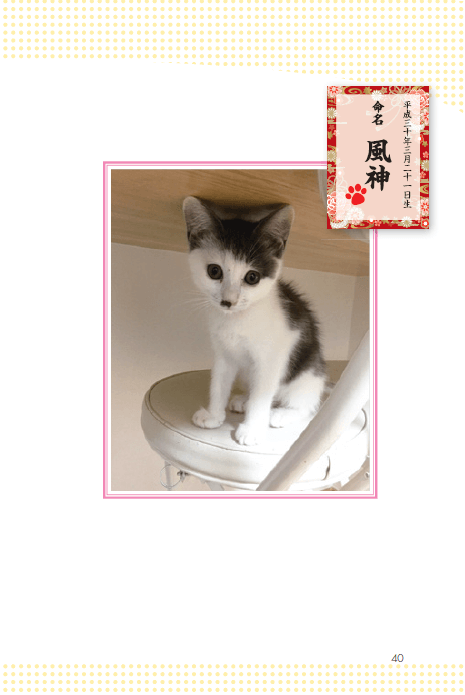 サンシャイン池崎の飼い猫「風神」