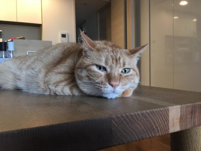 ぼんやりしている高齢猫(シニア猫)のイメージ写真