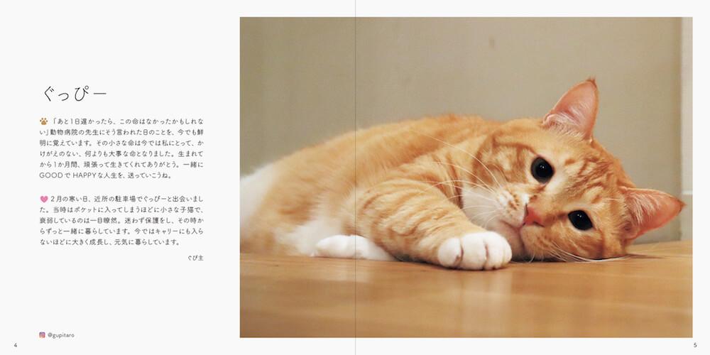 むちむちボディの人気猫「ぐっぴー」の写真 by 書籍「みんなイヌ、みんなネコ」