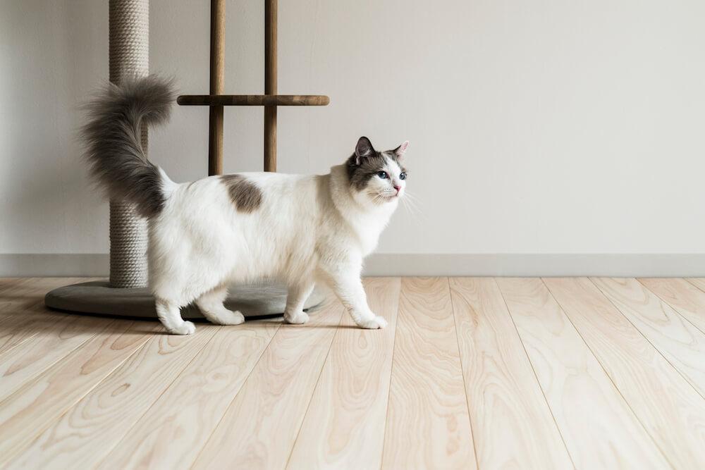 フローリング材「NEKOFLOOR(ネコフロア)」ヒノキの上を歩く猫