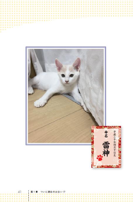 サンシャイン池崎の飼い猫「雷神」