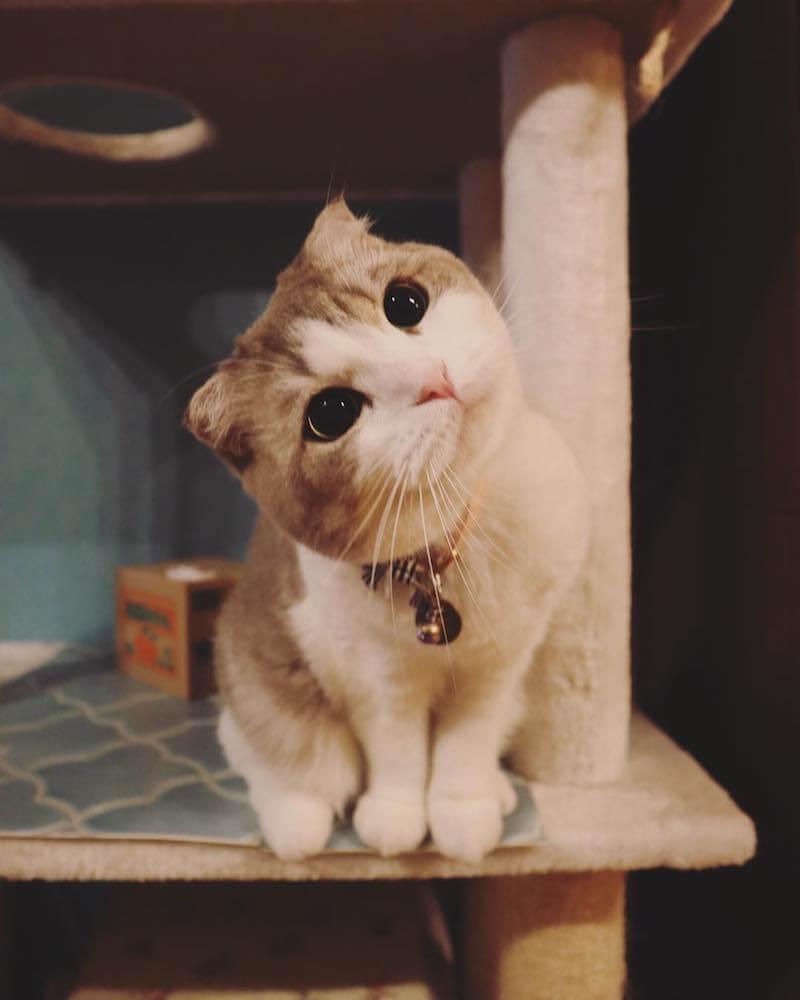 首をかしげるようなポーズの猫 by にゃんぱく(~ねこの万博~)