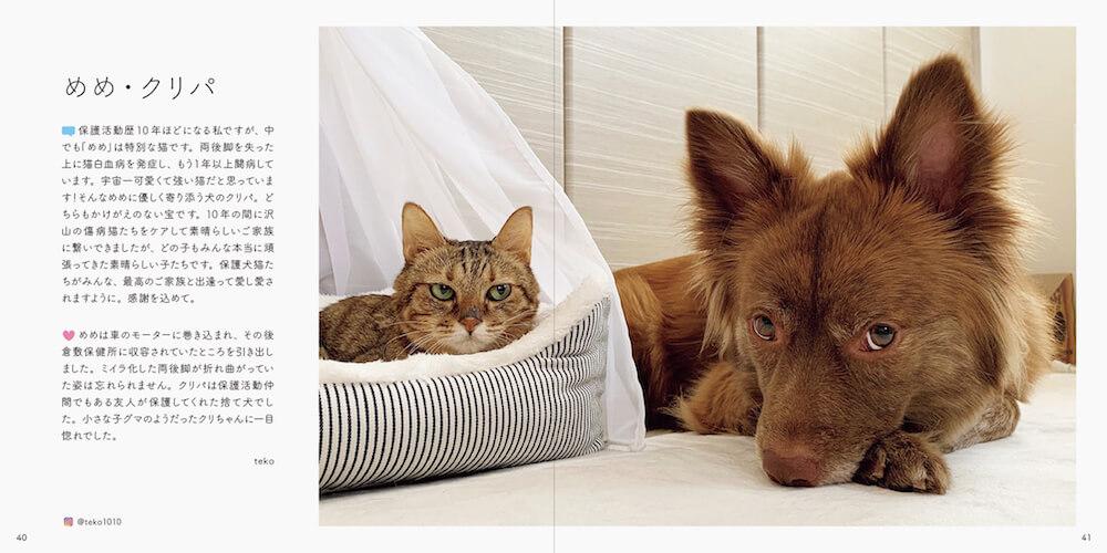 猫「めめ」と犬「クリパ」の写真 by 書籍「みんなイヌ、みんなネコ」