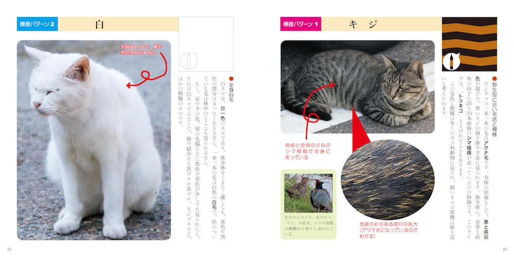 猫の模様解説イメージ by 書籍「ネコもよう図鑑」