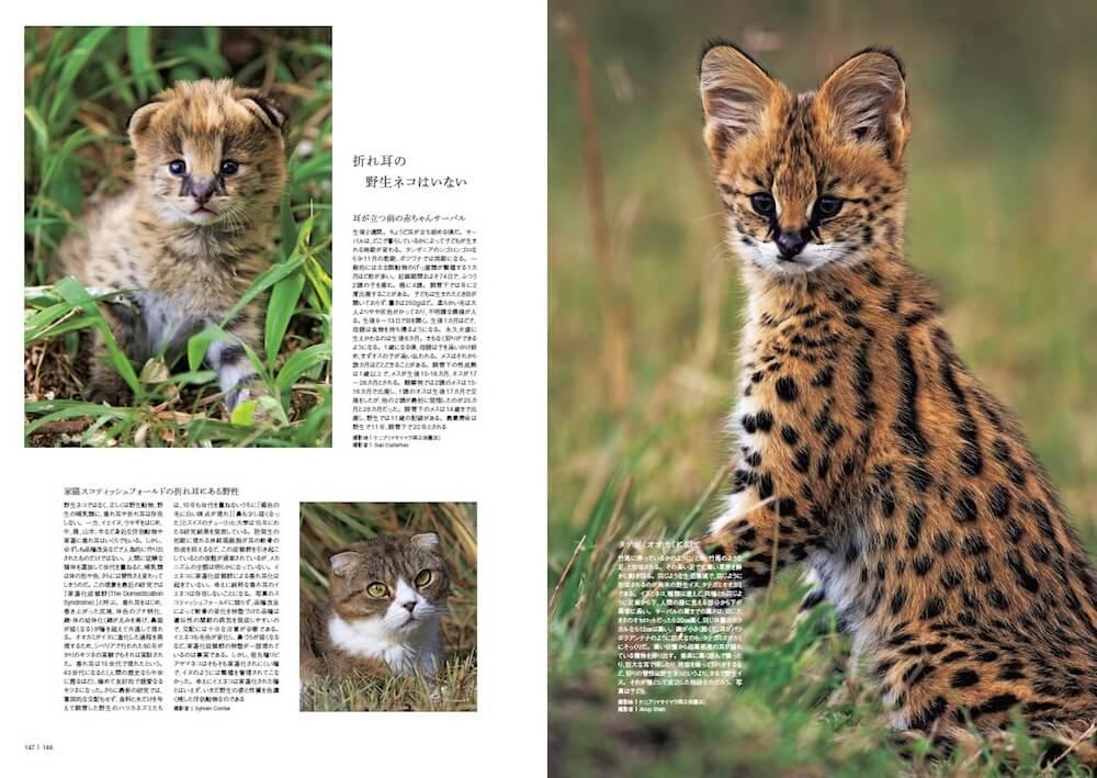赤ちゃんサーバル&子供のサーバル by 図鑑「家のネコと野生のネコ」