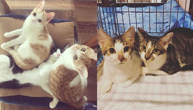 「ねこ浴場」新しい家族を待っている保護猫たち