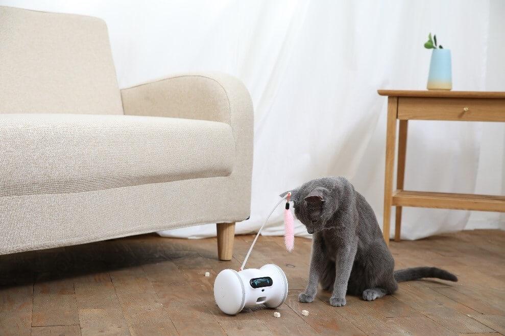 猫に向かってオヤツを排出する「バレム・ペット・フィットネス」