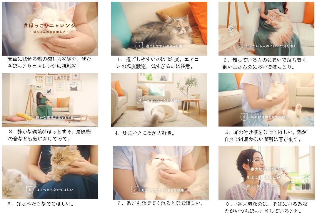 UCCが公開した猫の癒やし方「NEANS & ROASTERS(ニャンズ アンド ロースターズ)」の映像のワンシーン