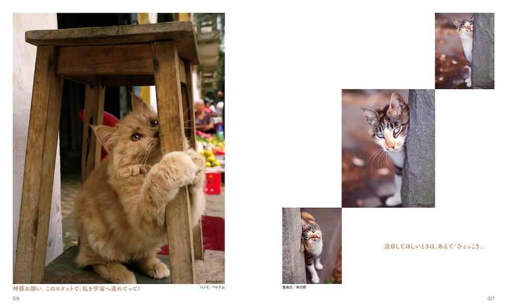 """椅子で爪を研ぐベトナム・ハノイの猫 by 新美敬子「わたしが撮りたい""""猫となり""""」"""