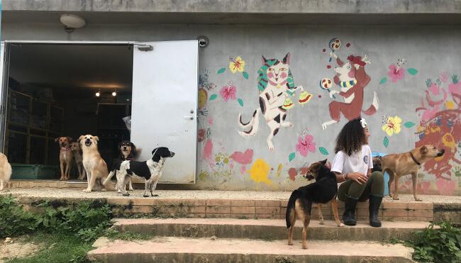 犬猫シェルター「宮古島SAVE THE ANIMALS」の外観イメージ
