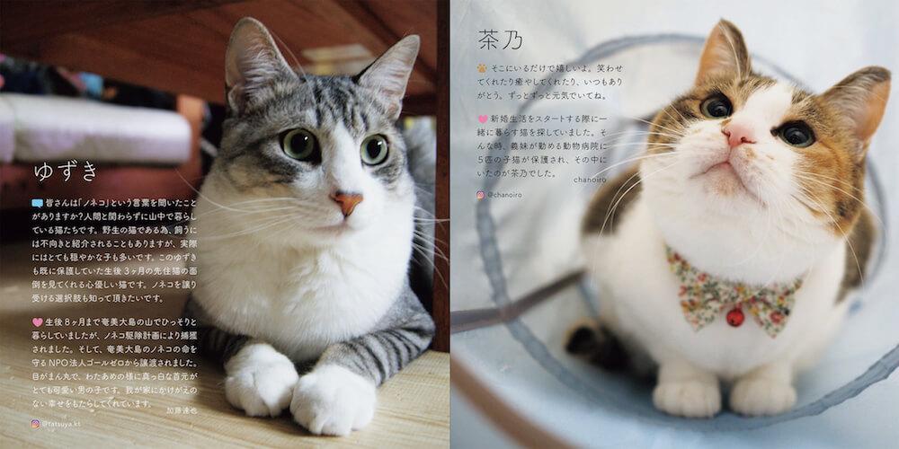 保護猫「ゆずき」と「茶乃」の写真 by 書籍「みんなイヌ、みんなネコ」