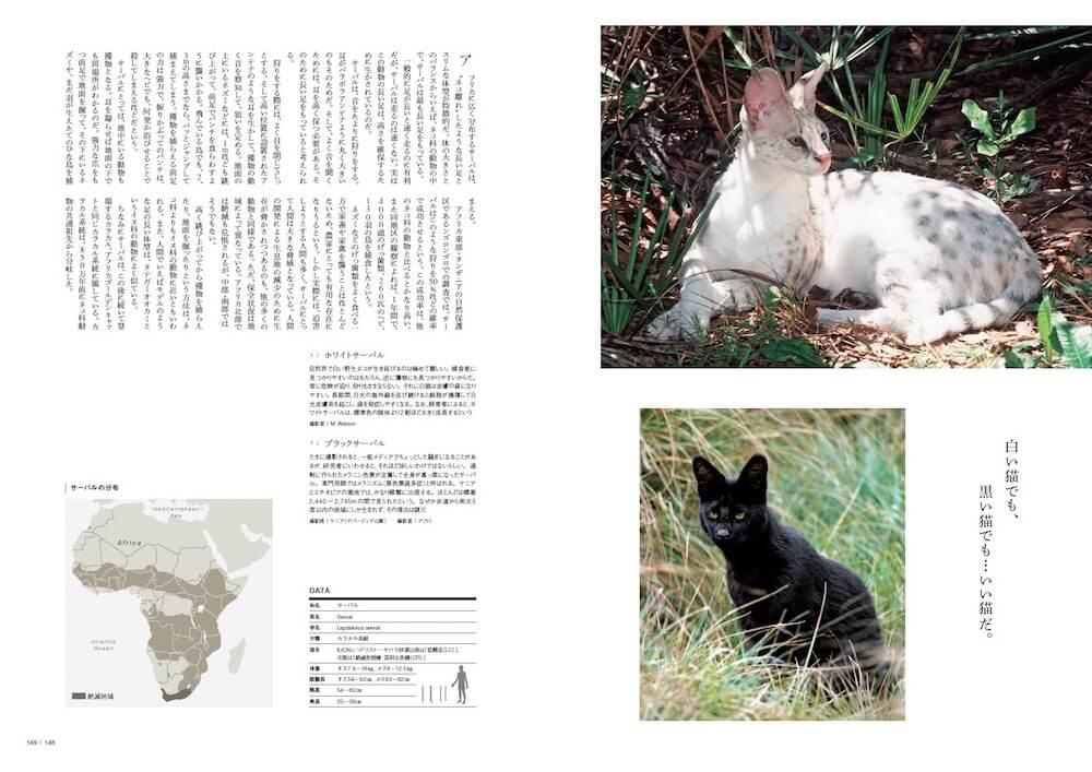 ホワイトサーバル&ブラックサーバル by 図鑑「家のネコと野生のネコ」