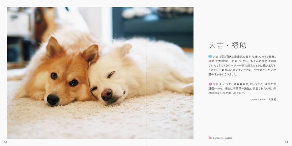 元保護犬「大吉」と「福助」の写真 by 書籍「みんなイヌ、みんなネコ」