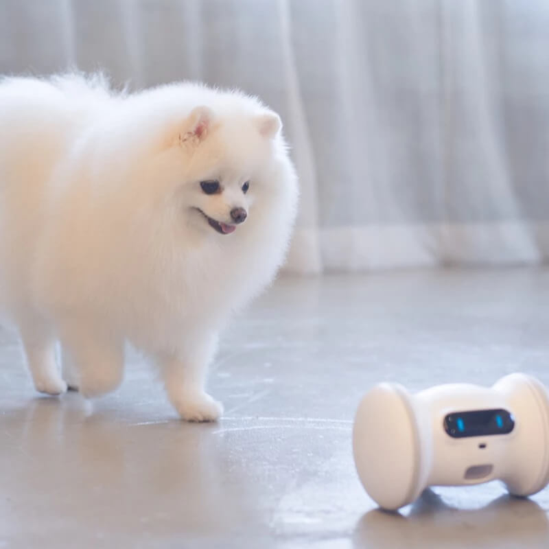 ペット用ロボット「バレム・ペット・フィットネス」と遊ぶ犬のイメージ