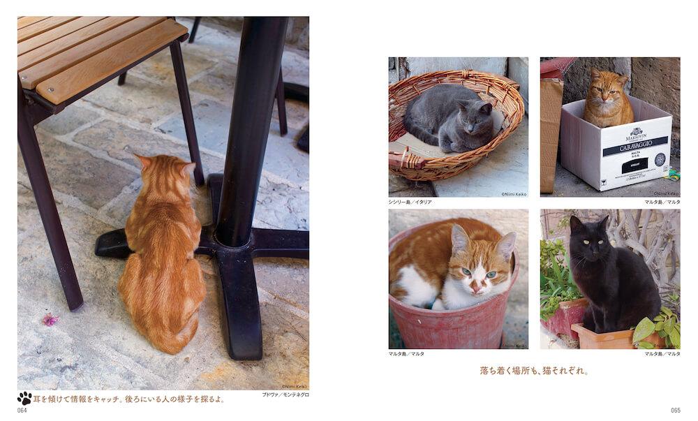 """耳をそばだてるモンテネグロの猫 by 新美敬子「わたしが撮りたい""""猫となり""""」"""
