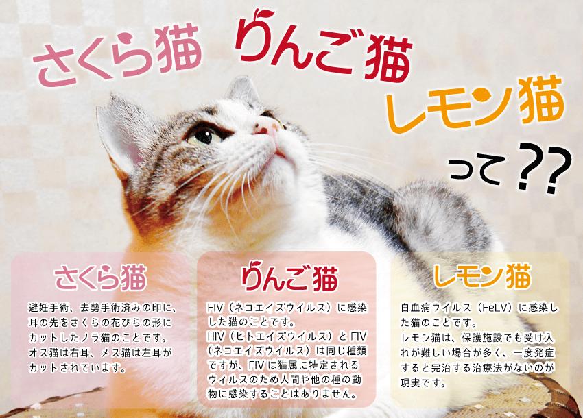 「さくら猫」「りんご猫」「れもん猫」の解説&説明