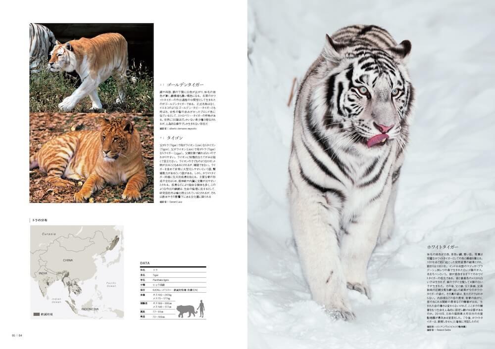 ホワイトタイガー、ゴールデンタイガー、タイゴン by 図鑑「家のネコと野生のネコ」