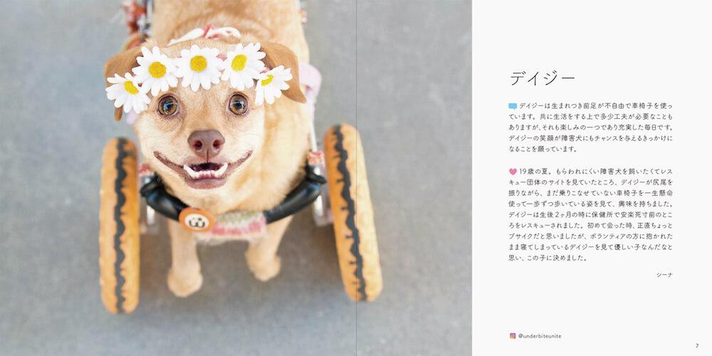 元保護犬「デイジー」の写真 by 書籍「みんなイヌ、みんなネコ」