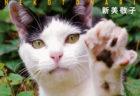 """世界42都市で出会った猫を収録、写真家・新美敬子さんの新刊「わたしが撮りたい""""猫となり"""