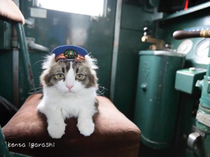 沖昌之さんの新作も展示!300点のネコ作品を鑑賞できる「ねこ専」9/25より神戸で開催