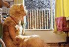 Blu-rayとDVD発売記念!映画「トラさん」の猫スーツがタワーレコードで展示されるニャ