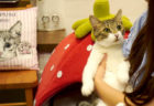 店内はまるで不思議の国…看板ネコやウサギと触れ合える「マイペリドットカフェ」がリニューアルOPEN