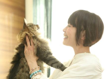月額500円で愛猫の悩みを相談できる「にゃんコール」11匹の猫と暮らす動物看護士が対応