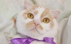 人気猫・ホイップの単独展「まるごとホイちゃん展」が静岡で初開催!9/7から
