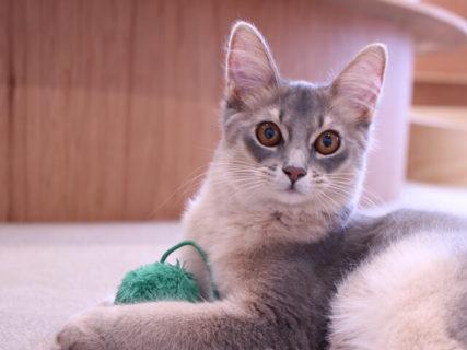 半個室スペースを完備!人目を気にせずモフれる猫カフェ「Moff animal cafe」大分オーパに登場