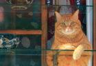 猫の写真を思う存分愛でるのニャ…話題の「ねこがかわいいだけ展」が横浜と静岡で追加開催
