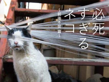 可愛いだけが猫じゃニャい!大ヒット写真集の第2弾「必死すぎるネコ ~前後不覚篇~」