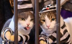 ディズニーチケットも当たる!埼玉県の猫カフェで「ハロウィンにゃんぼ!くじ」 が開催
