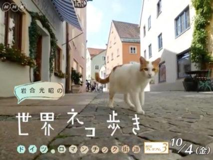 NHKで放送されている「岩合光昭の世界ネコ歩き」10月4日(土)の最新作は「ドイツ・ロマンチック街道」