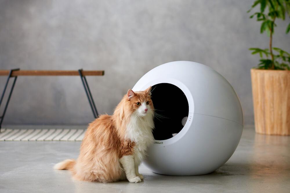 全自動の猫トイレ「CIRCLE 0(サークル ゼロ)」とノルウェジャンフォレストキャット