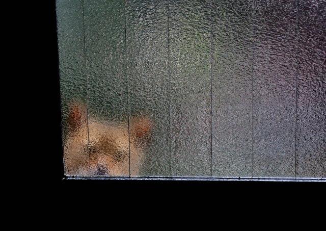 窓の外に潜む猫のイメージ写真