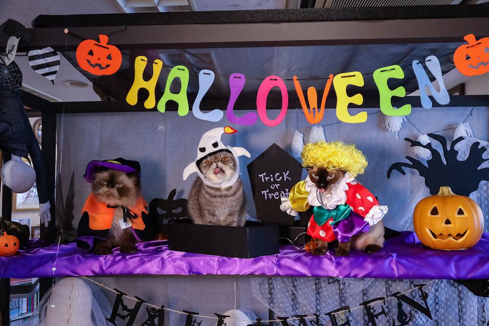 猫カフェ「猫家 大宮店」のハロウィンキャンペーンの開催風景