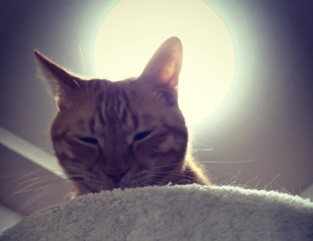 光を背にした茶トラ猫の写真