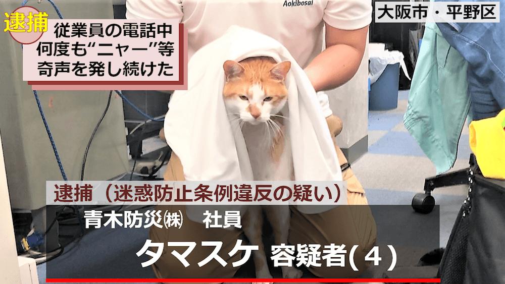 迷惑防止条例違反の容疑で逮捕された青木防災の「猫の広報課長タマスケ」