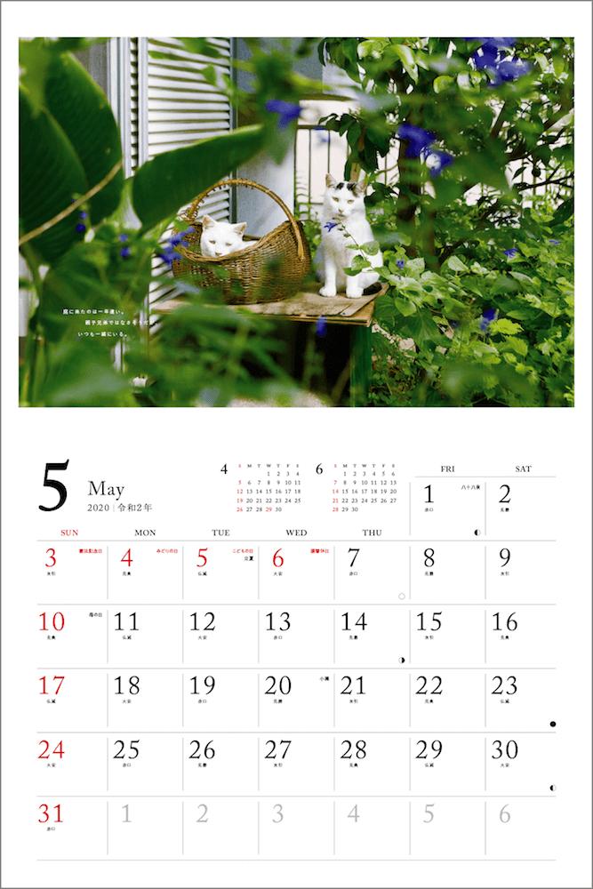 庭に置いたかごでくつろぐ猫 by 「2020 安彦家の窓辺の猫 カレンダー」の表紙