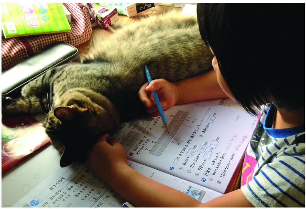 猫に邪魔されながら宿題をする手島姫萌さん by てしま旅館の猫庭館長