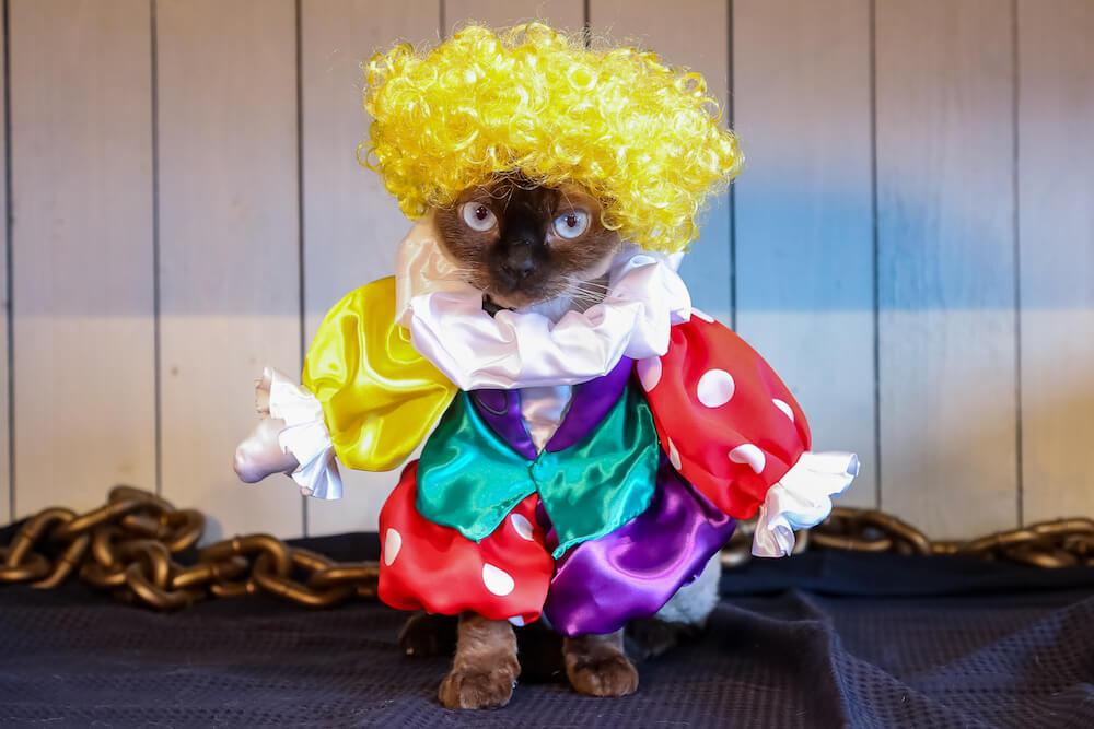 ピエロのコスプレをした猫 by 猫カフェ 猫家