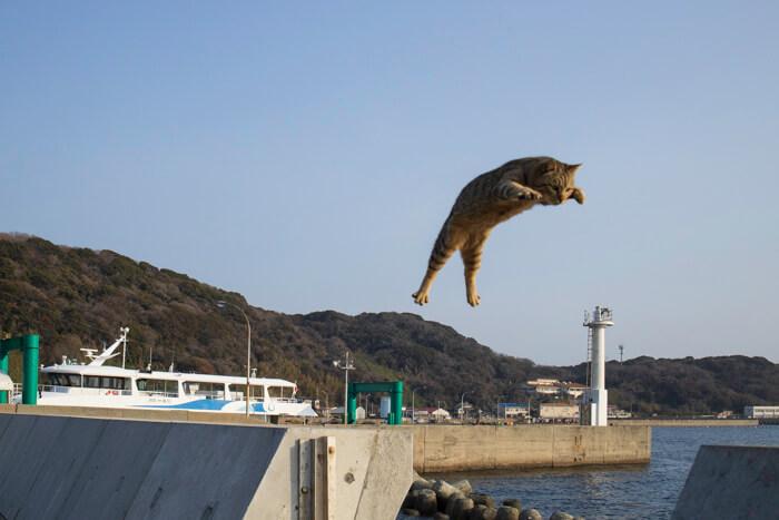 ジャンプする猫「飛び猫」 by 五十嵐健太