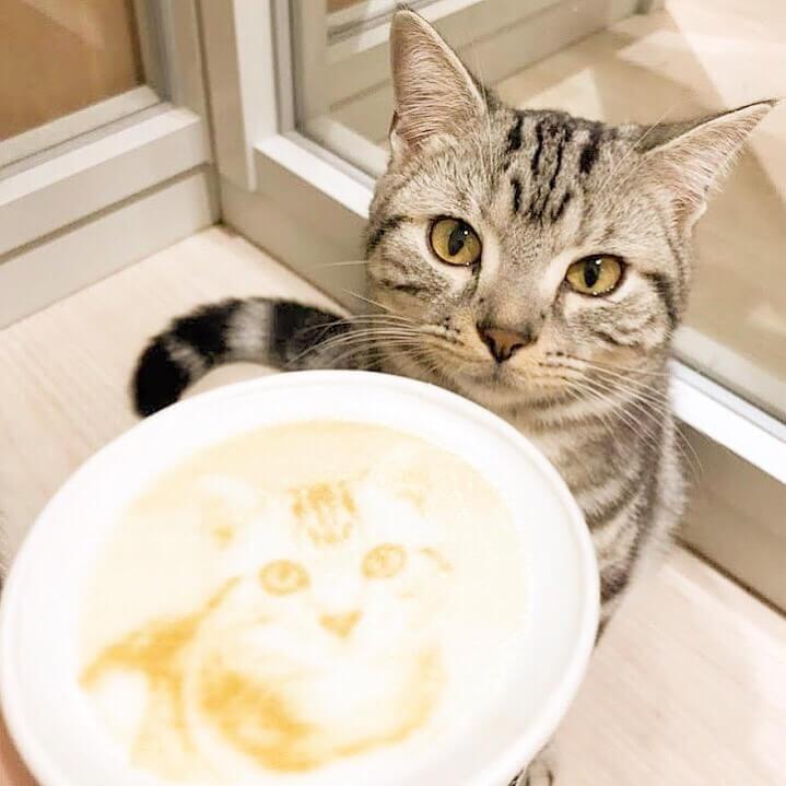 猫スタッフの顔を描いたラテアート by Moff animal cafe(モフ アニマルカフェ)大分オーパ店