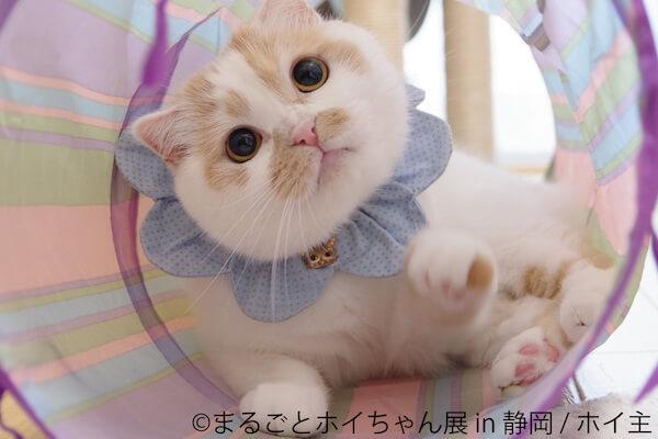 ちくわ柄の人気猫「ホイップ(ホイちゃん)」の目がまんまるになった写真